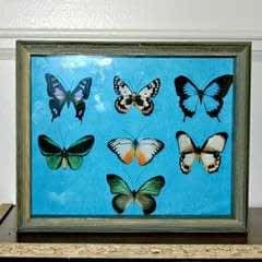 Faux Butterfly Shadowbox Curiosity Cabinet