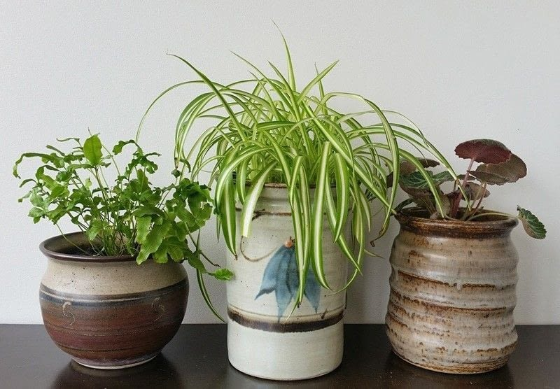 Plant Vases Indoor