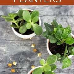 Diy Studded Mini Planters