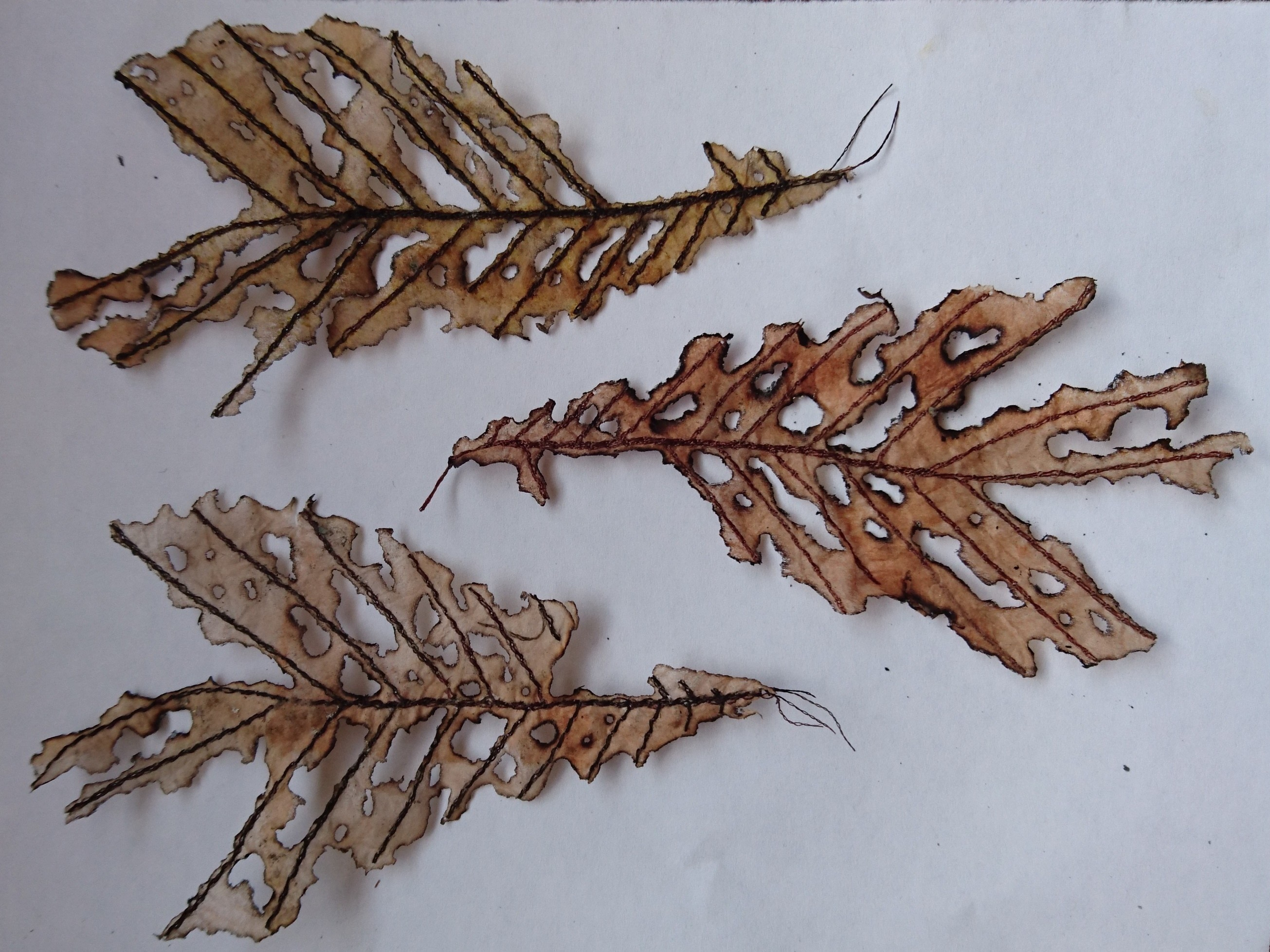 Autumn Leaf Craft Project How To Embroider A Flower · How To Embroider Art  · Needlework