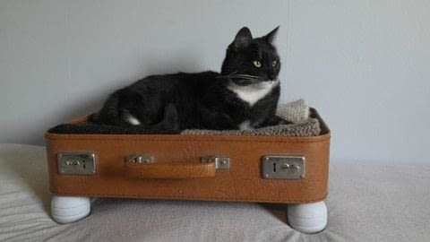 Bed cat diy  .  Free tutorial with pictures on how to make a pet bed in under 60 minutes using suitcase and knobs. How To posted by Gunhild N. .  in the Home + DIY section Difficulty: Easy. Cost: No cost. Steps: 4