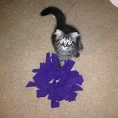 Cat Toy Octopus