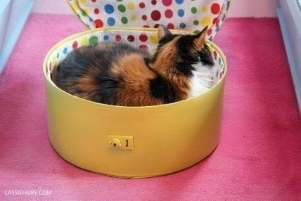 A cosy spot for your cat to curl up and nap. .  Free tutorial with pictures on how to make a pet bed in under 120 minutes using fabric, thread, and pva glue. Inspired by cats. How To posted by Cassiefairy.  in the Home + DIY section Difficulty: Simple. Cost: Absolutley free. Steps: 7