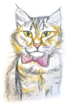 Sketch and colour a cat with pastels .  Free tutorial with pictures on how to draw a pastel drawing in under 60 minutes by creating and drawing with paper, pencil, and pan pastels. Inspired by cats. How To posted by Cat Morley.  in the Art section Difficulty: Simple. Cost: Cheap. Steps: 25