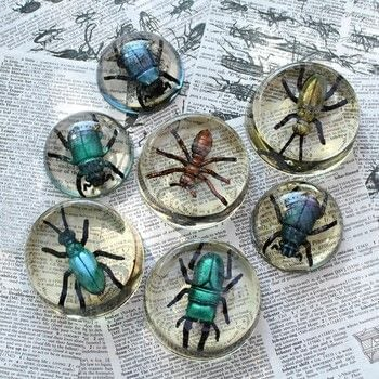 Paint faux bugs to look real and then trap them in resin! .  Free tutorial with pictures on how to make an ornament in under 60 minutes by creating, spraypainting, jewelrymaking, collage, and resinworking with e-6000 glaze coat resin, plastic bugs , and decoart metallic lustres. How To posted by Mark Montano.  in the Decorating section Difficulty: Easy. Cost: Cheap. Steps: 3