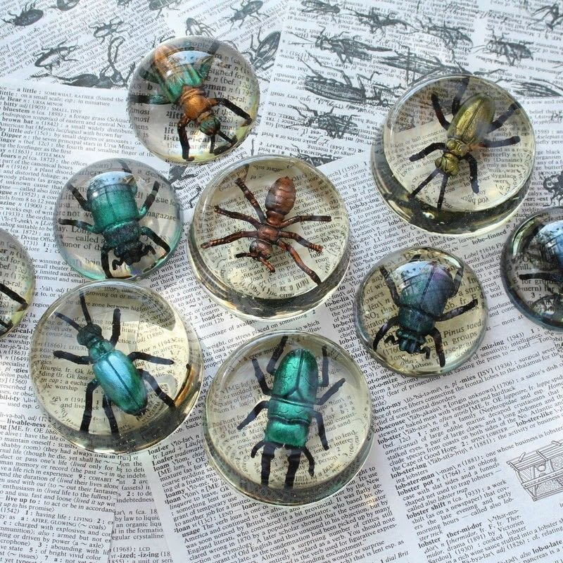 Faux Bugs In Resin 183 How To Make An Ornament 183 Decorating
