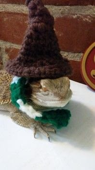 Wizard Lizard .  Make a witch costume in under 45 minutes by crocheting with yarn. Inspired by for pets, halloween, and harry potter. Creation posted by ChristineMarie.  in the Yarncraft section Difficulty: Easy. Cost: Absolutley free.