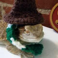 Harry You're A Lizard