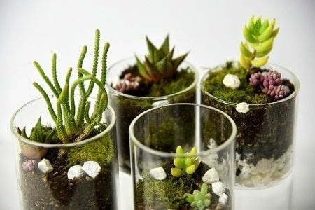 An inspiring idea for an easy DIY Terrarium! .  Free tutorial with pictures on how to make a plant marker in under 60 minutes using pebbles, charcoal, and cactus. Inspired by gifts and inspiration. How To posted by Dylan T.  in the Home + DIY section Difficulty: Easy. Cost: Cheap. Steps: 1