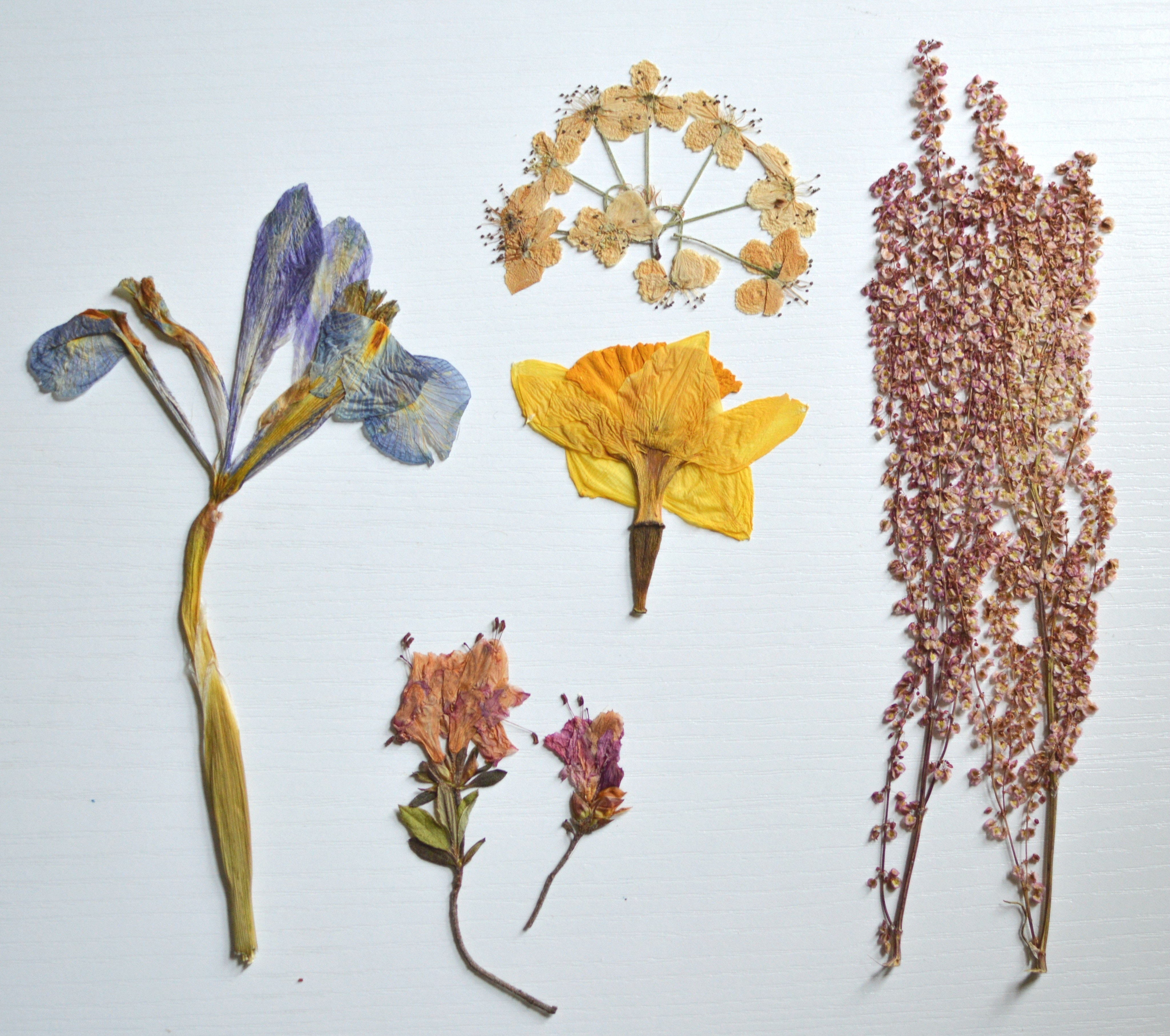 Pressed Flowers · A Plant A Flower A Tree · Other on Cut Out Keep