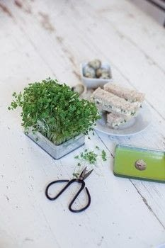 Make a cute little tin containing cress seeds and growing instructions.. .  Free tutorial with pictures on how to make a garden / terrarium in under 150 minutes using tin, newspaper, and spray paint. How To posted by jemima schlee.  in the Other section Difficulty: Simple. Cost: Cheap. Steps: 7