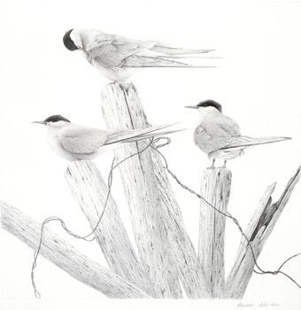 Bird Art .  Free tutorial with pictures on how to draw an animal drawing in under 120 minutes by creating and drawing with paper, pencil, and eraser. Inspired by birds. How To posted by Search Press.  in the Art section Difficulty: 3/5. Cost: Cheap. Steps: 8