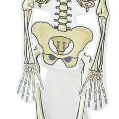 Shivering Skeleton