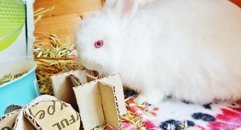 Bunnies love to play .  Free tutorial with pictures on how to make a pet toy in under 10 minutes using cardboard, glass, and ruler. Inspired by rabbits and toys. How To posted by Melva.  in the Home + DIY section Difficulty: Easy. Cost: No cost. Steps: 5