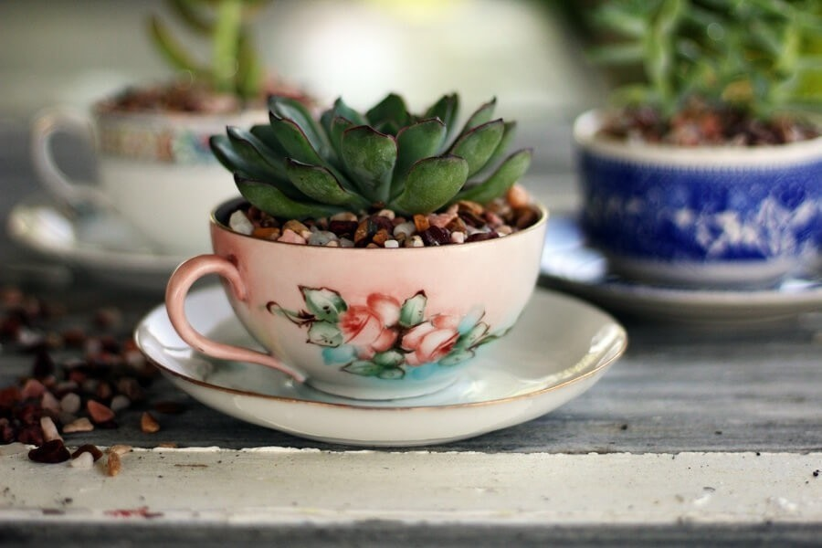 The Sweetest Tea Cup Succulent Planters 183 How To Plant A
