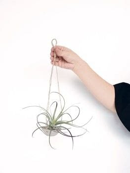 How to Raise a Plant and Make it Love You Back .  Free tutorial with pictures on how to make a hanging planter in under 60 minutes by gardening and molding with parchment paper, clay, and water. How To posted by Laurence King.  in the Home + DIY section Difficulty: Simple. Cost: Cheap. Steps: 9