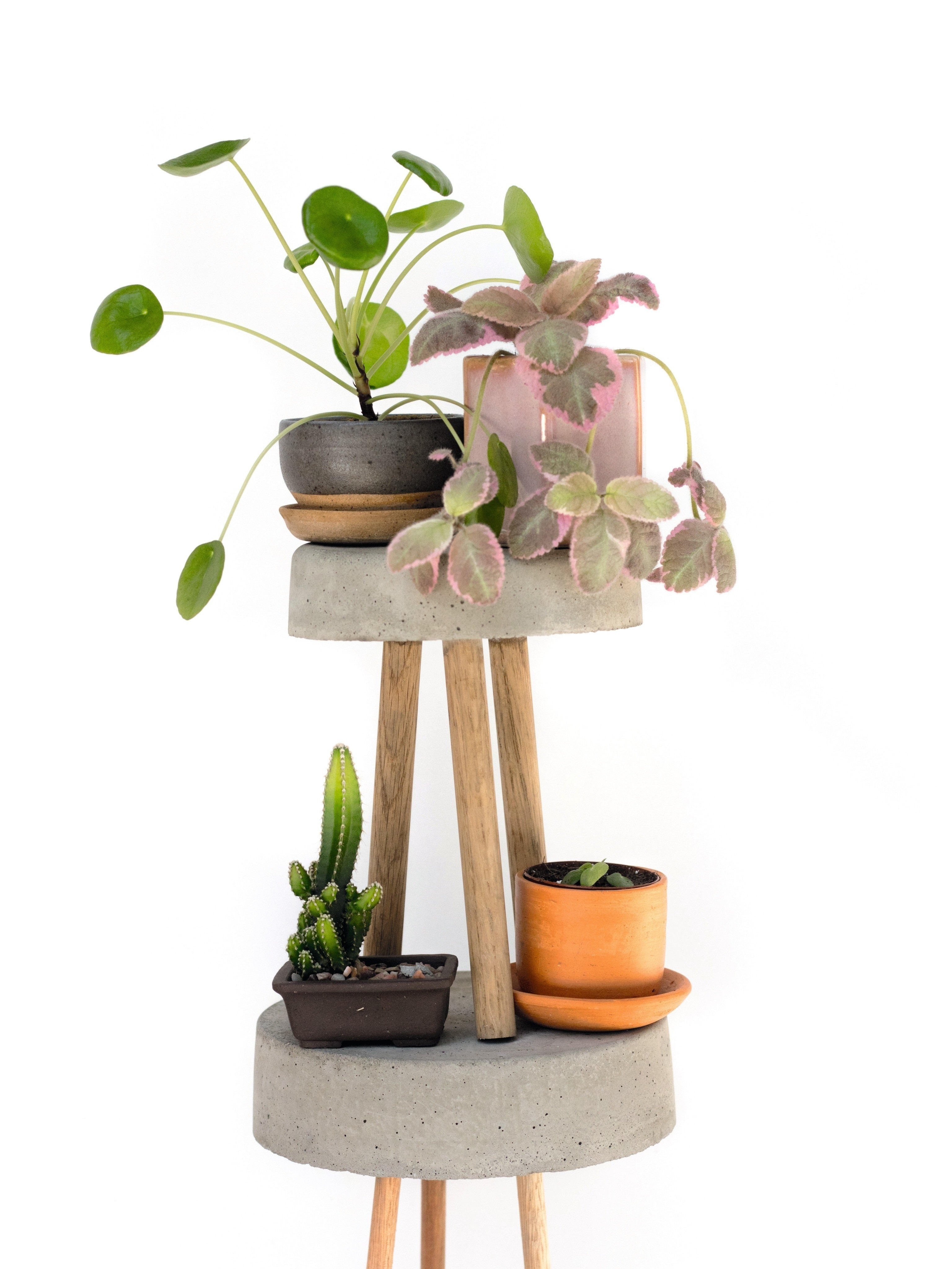 Plant Stands · Extract from How to Raise a Plant by Morgan
