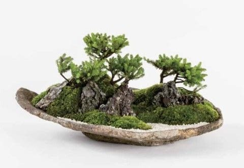 Miniature Japanese Gardens .  Free tutorial with pictures on how to plant a plant / a flower / a tree in under 60 minutes by gardening with seedling, moss, and soil. Inspired by japanese. How To posted by Tuttle Publishing.  in the Home + DIY section Difficulty: Simple. Cost: 3/5. Steps: 19
