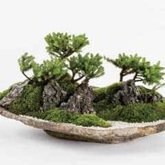 Basic Bonsai Landscape Techniques