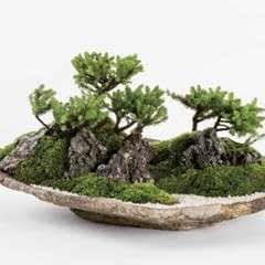 Basic Bonsai Landscape Techniques