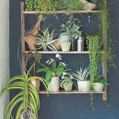 A Little Garden On Shelves