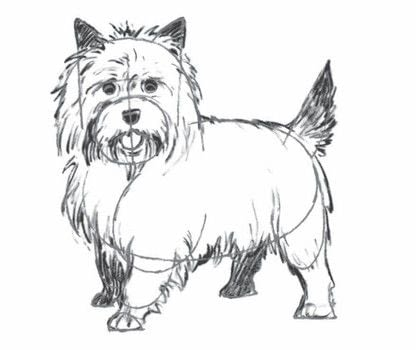 Draw 200 Animals .  Free tutorial with pictures on how to draw an animal drawing in under 10 minutes by creating and drawing with pencil and paper. Inspired by dogs. How To posted by Watson-Guptill.  in the Art section Difficulty: 3/5. Cost: No cost. Steps: 6