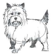 Draw A Terrior Dog