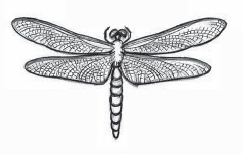 Draw 200 Animals .  Free tutorial with pictures on how to draw an animal drawing in under 10 minutes by creating and drawing with pencil and paper. Inspired by dragonflies. How To posted by Watson-Guptill.  in the Art section Difficulty: 3/5. Cost: No cost. Steps: 8