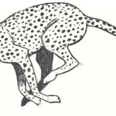 Draw A Cheetah