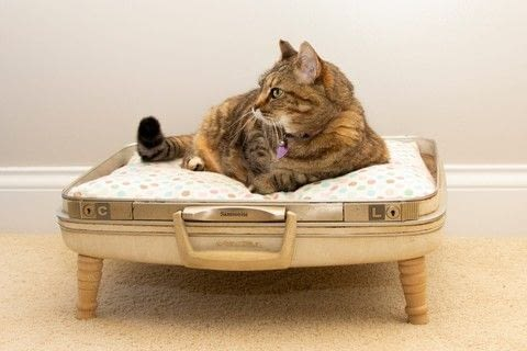 A cute bed for your cat .  Make a pet bed in under 180 minutes using suitcase, stool, and screws. Creation posted by LollyLabbit.  in the Home + DIY section Difficulty: 5/5. Cost: 3/5.