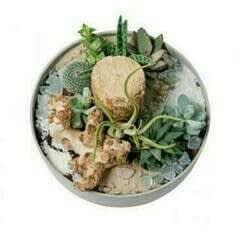 Diy: Succulents In A Bowl