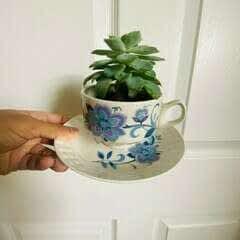 DIY Tea Cup Succulent Planter