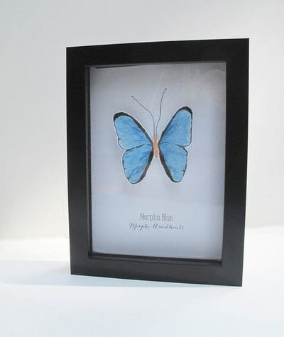 How to make a taxidermy mount. Faux Butterfly Taxidermy - Step 4
