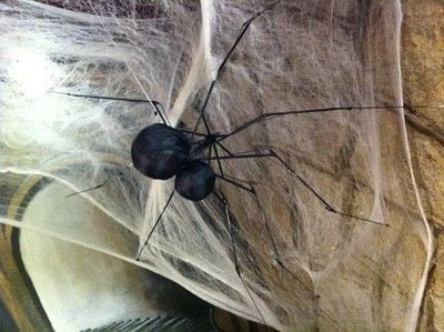 How to make a Halloween decoration. Spiderbrella!  - Step 7