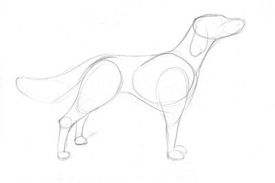 How to draw an animal drawing. Draw A Dog In 15 Minutes - Step 3