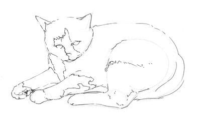 How to draw & paint a piece of animal art. Draw A Cat In Fifteen Minutes - Step 4