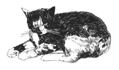 How to draw & paint a piece of animal art. Draw A Cat In Fifteen Minutes - Step 6
