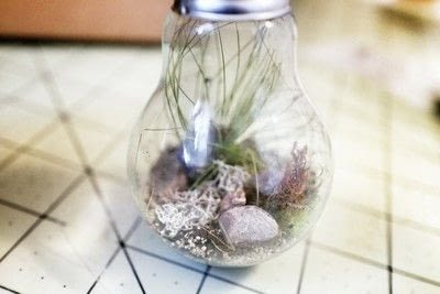 How to make a terrarium. Lightbulb Terrarium - Step 11