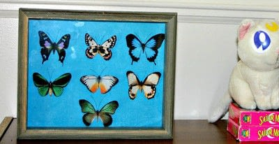 How to make a shadow box. Faux Butterfly Shadowbox Curiosity Cabinet - Step 6
