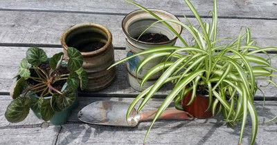 How to make a vase, pot or planter. Upcycled Ceramic Jars To Plant Pots - Step 3