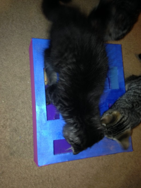 Cat toy puzzle box how to make a pet toy other on cut for How to make a cat toy out of a box