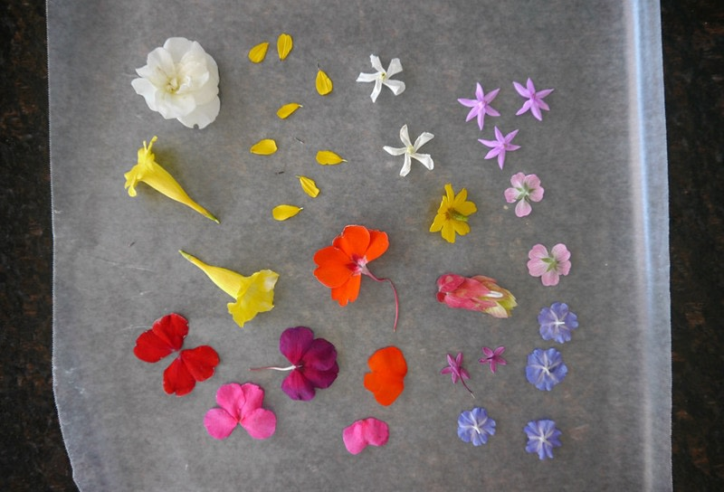 Laminated Pressed Flowers ~ Diy pressed flower laminated bookmarks · how to make a