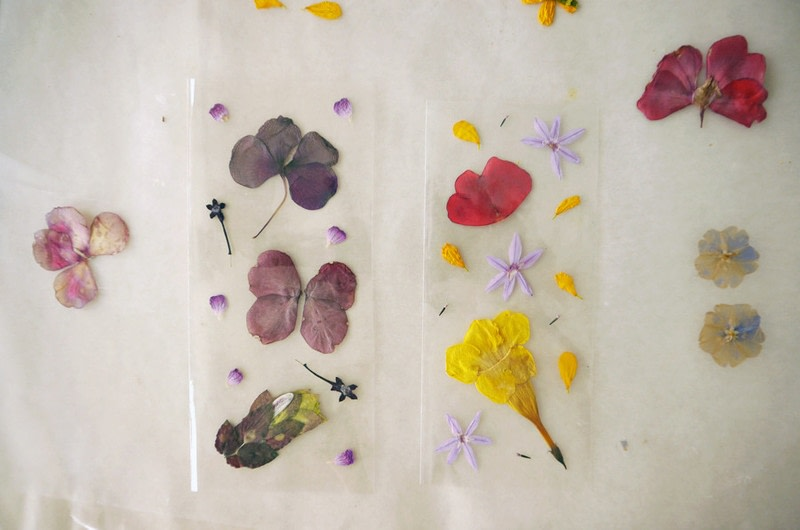 Diy Pressed Flower Laminated Bookmarks 183 How To Make A