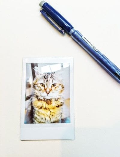 How to draw a pastel drawing. Pastel Cat - Step 1