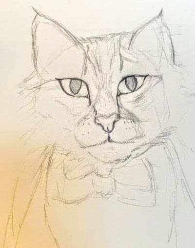 How to draw a pastel drawing. Pastel Cat - Step 16