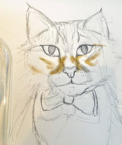 How to draw a pastel drawing. Pastel Cat - Step 18