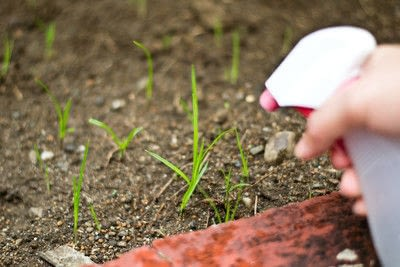 How to make a garden project / plant. Homemade Weed Killer - Step 2