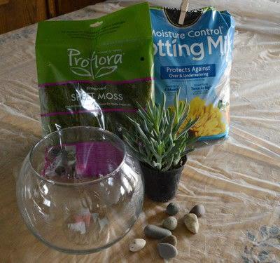 How to make a terrarium. Diy Succulent Terrarium - Step 1