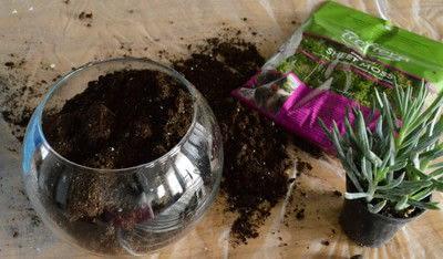 How to make a terrarium. Diy Succulent Terrarium - Step 2