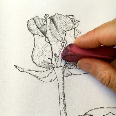 How to paint a piece of watercolor art. How To Illustrate A Rose - Step 5